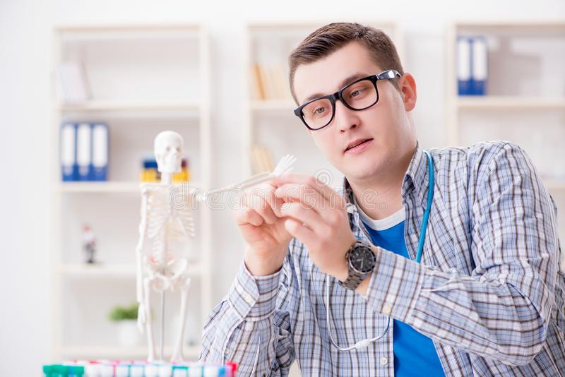 De medische student die skelet in klaslokaal bestuderen tijdens lezing royalty-vrije stock foto