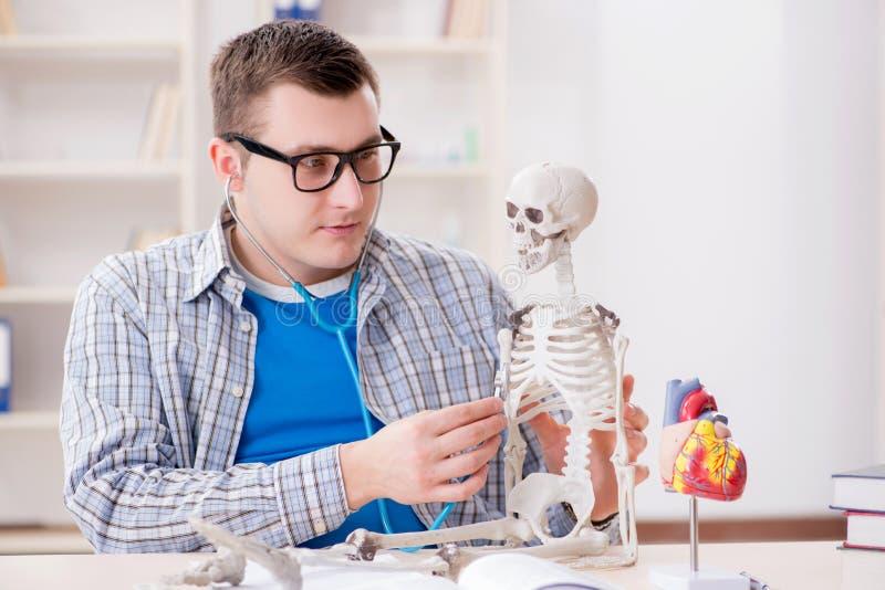 De medische student die skelet in klaslokaal bestuderen tijdens lezing royalty-vrije stock afbeelding