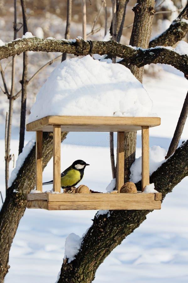 De mees zit op vogel-voeder in de winter stock afbeeldingen
