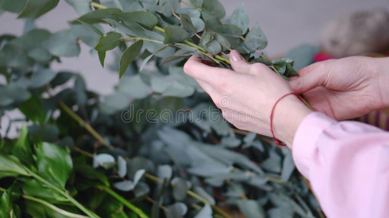De meisjesbloemist kiest eucalyptus voor decoratie close-up royalty-vrije stock fotografie