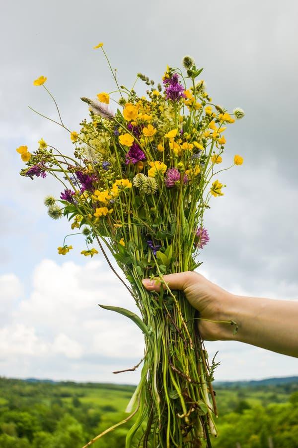De meisjesholding in haar overhandigt een mooi boeket met multi-colored wilde bloemen Verbazende bos van wilfbloemen in de aard royalty-vrije stock afbeeldingen