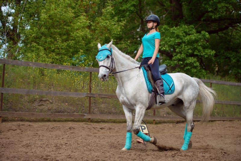 De meisjesruiter leidt het paard in de berijdende cursus in de zomerdag op stock afbeeldingen