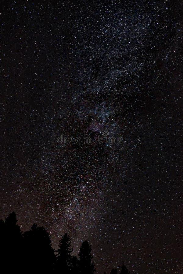 De melkachtige manier van de nachthemel met miljard sterren en boomsilhouet royalty-vrije stock foto