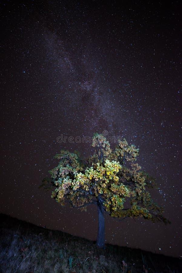 De Melkweg over de alleen boom royalty-vrije stock afbeeldingen