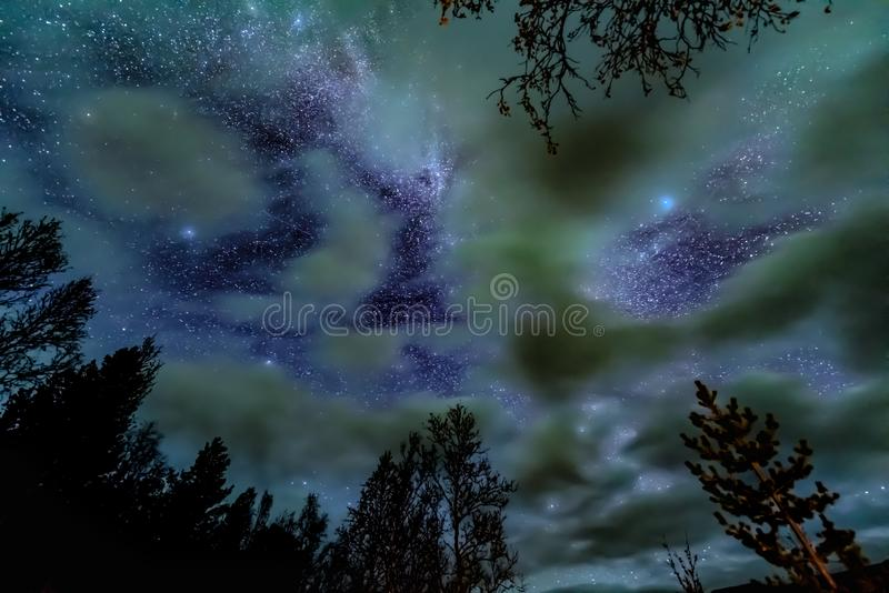 De Melkwegmelkweg boven bos stock foto