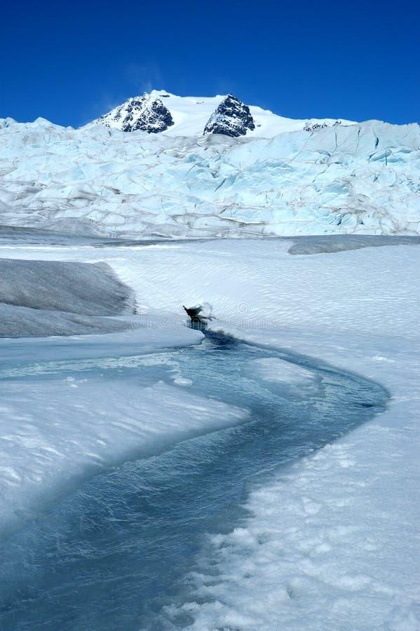 De Mendenhall-Gletsjer royalty-vrije stock fotografie