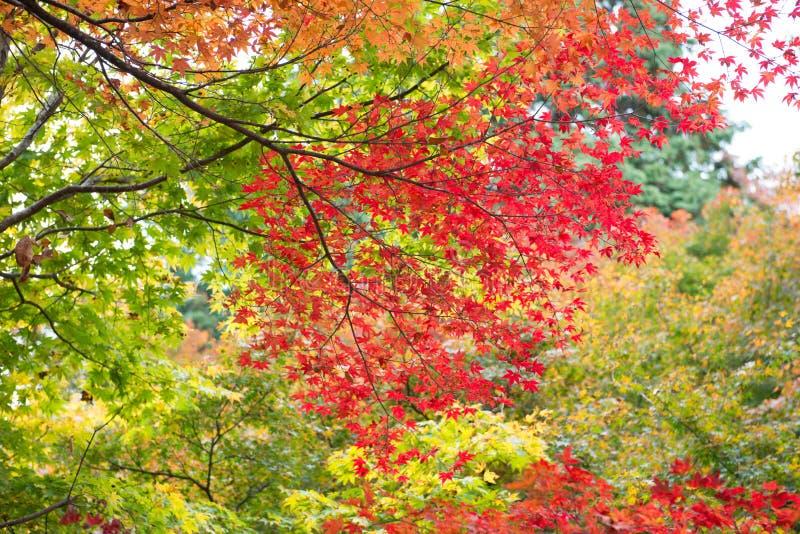 De mengeling kleurde bladeren stock fotografie