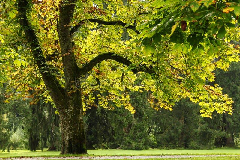 De mening over het park met grote bomen in de zonnige dag royalty-vrije stock fotografie