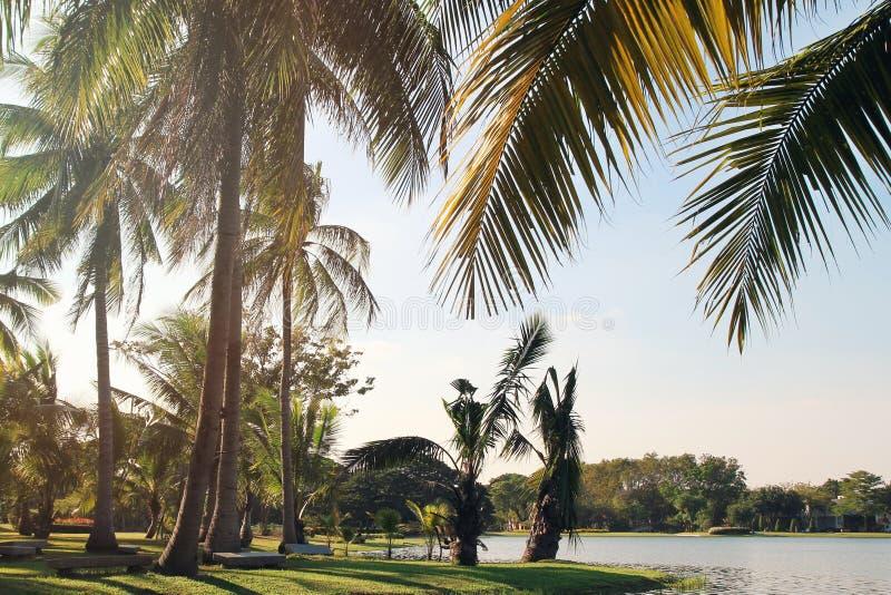 De mening over de kokosnotenpalmen dichtbij aan een meer op een achtergrond van een blauwe hemel Gestemde foto stock foto