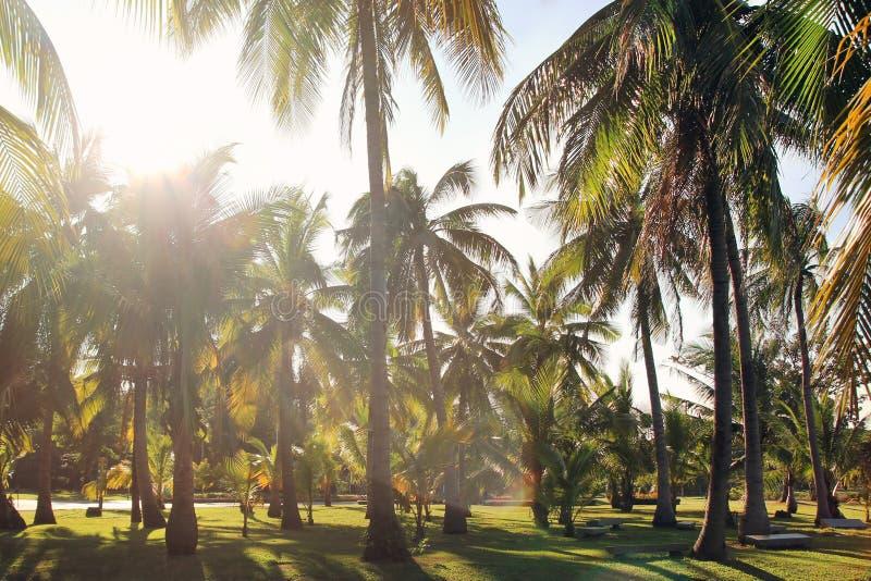De mening over de kokosnotenpalmen op een achtergrond van een blauwe hemel Gestemde foto stock foto