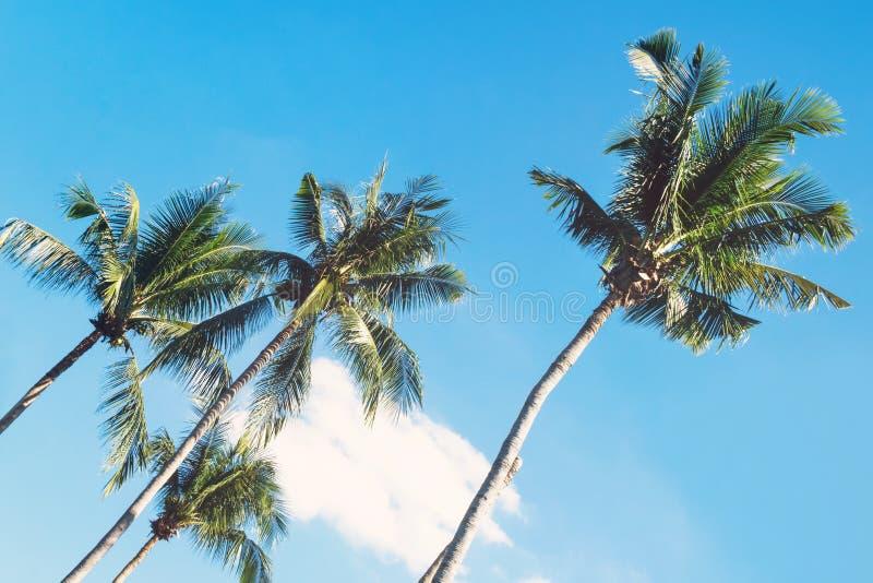 De mening over de kokosnotenpalmen op een achtergrond van een blauwe hemel Gestemde foto stock foto's