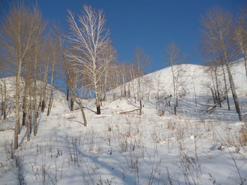 De mening van aardrusland van het bergbos stock afbeelding