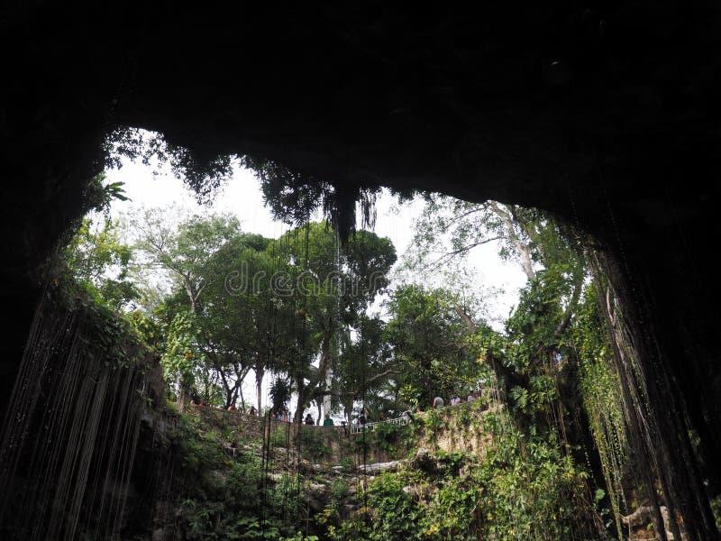De mening van de bodem van een Cenote royalty-vrije stock fotografie