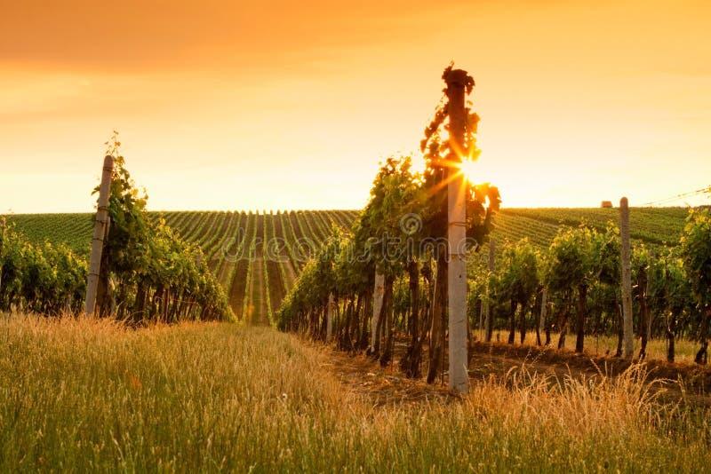 De mening van de avond van de wijngaarden stock foto