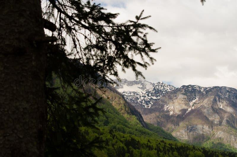 De mening van de bergboom van Meer Bohinj stock afbeeldingen