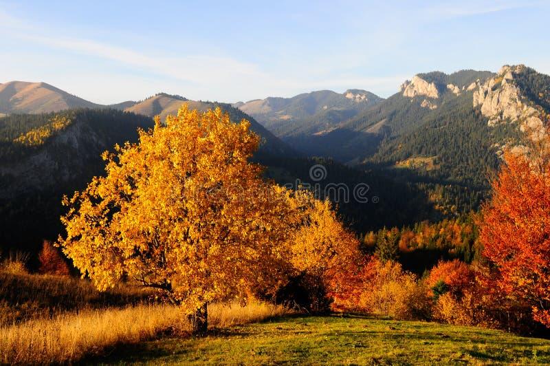 De mening van de herfst stock foto