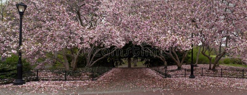 De mening van de lente in het park stock foto's