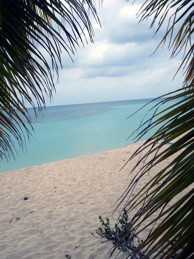 De mening van de palm, Caraïbisch Puerto Rico, stock afbeeldingen