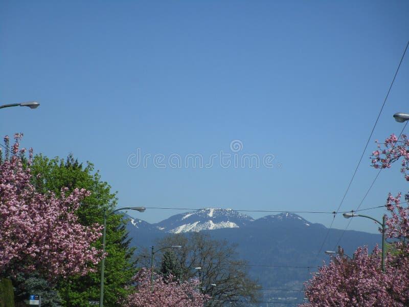 De mening van de Grotere Bergen van Vancouver ` s Northshore met roze kers komt in de voorgrond, Brits Colombia, Canada, 2018 tot royalty-vrije stock afbeeldingen