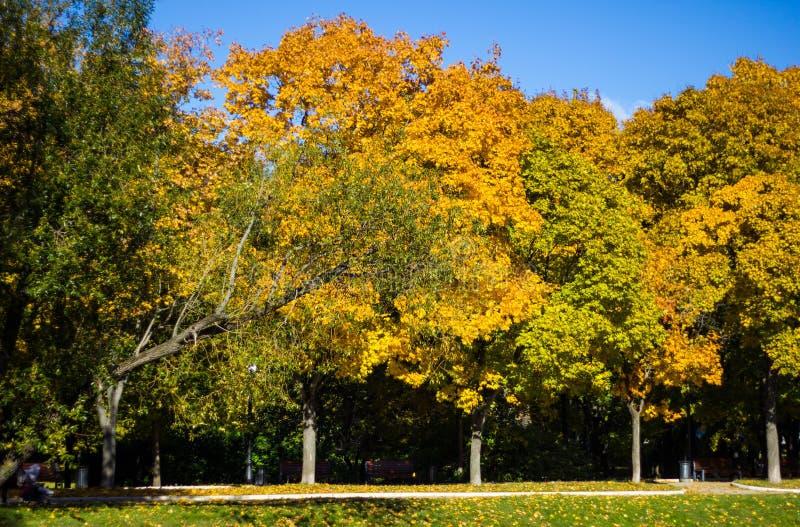 De mening van het de herfstlandschap van de Gouden steeg met kleurrijke bomen in de vijvers van Parknovodevichy in Moskou Russisc stock afbeeldingen