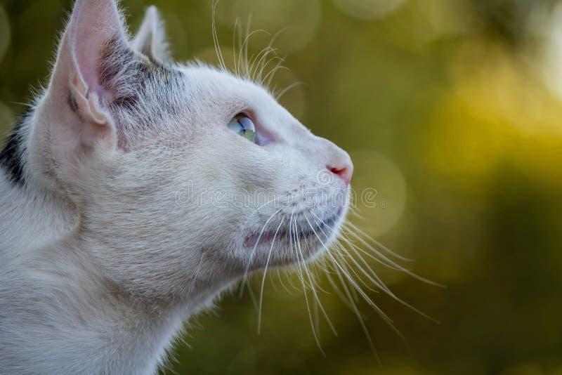 de mening van het kattenprofiel stock foto