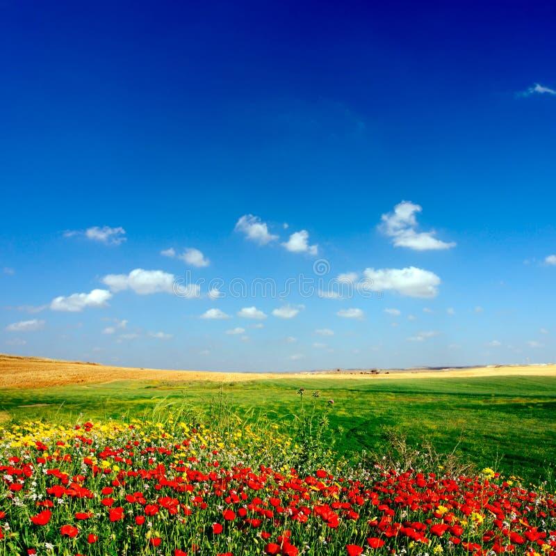 De mening van het landschap stock foto's