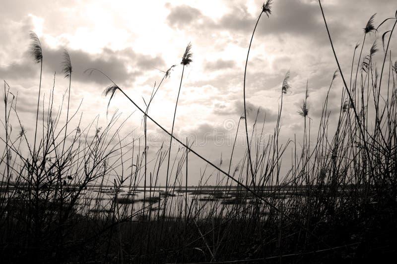 De mening van het meer stock fotografie