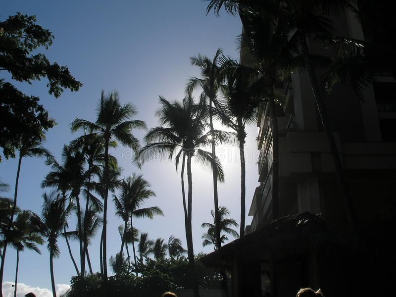 De Mening van het palmenhotel stock foto