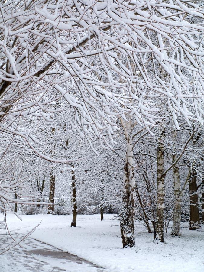 De mening van het paradijs van de winter met bomen die door sneeuw worden behandeld stock afbeeldingen
