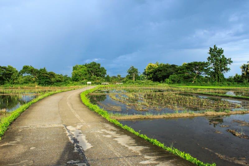 De mening van het rijstlandbouwbedrijf royalty-vrije stock foto's