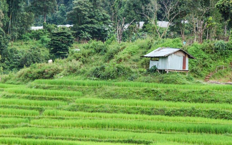 De mening van het rijstlandbouwbedrijf royalty-vrije stock fotografie