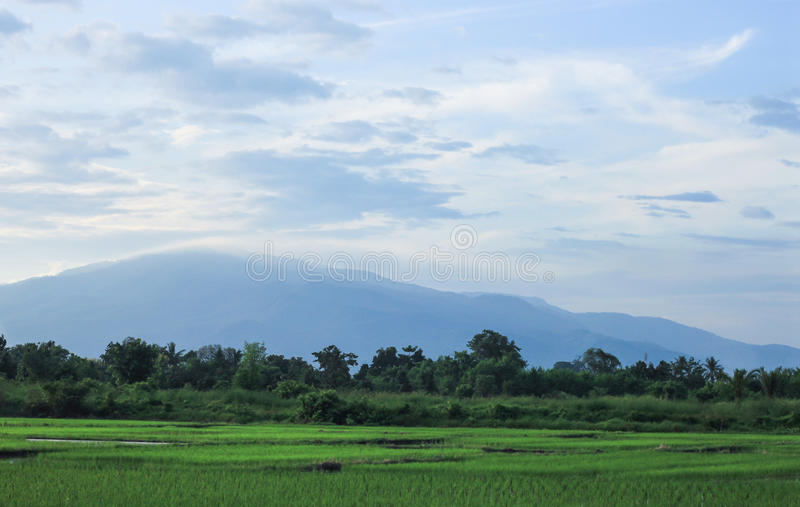 De mening van het rijstlandbouwbedrijf stock afbeeldingen