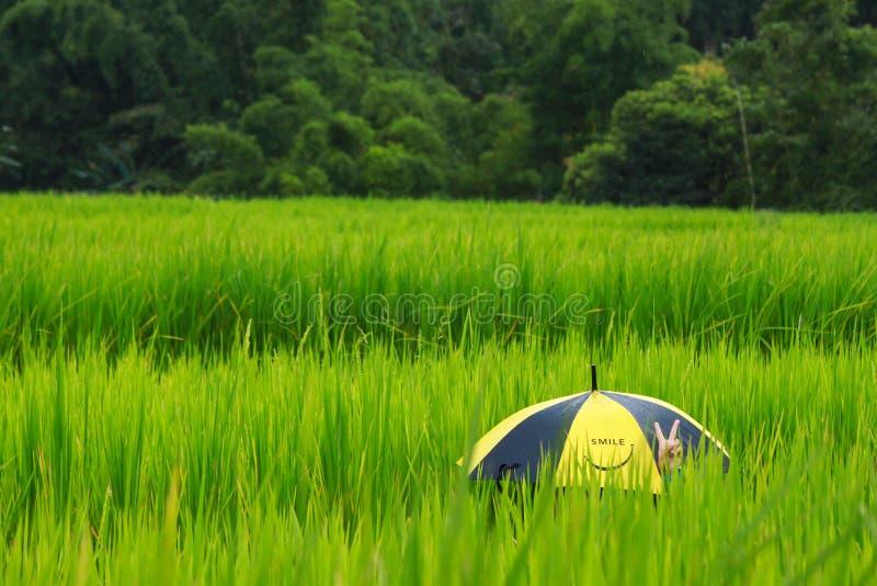 De mening van het rijstlandbouwbedrijf royalty-vrije stock afbeelding