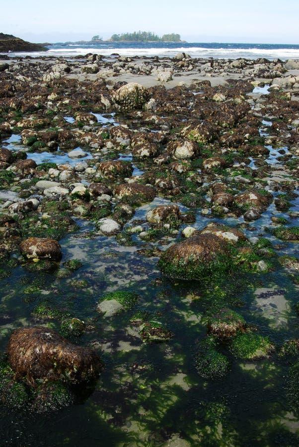 De mening van het strand in florenciabaai royalty-vrije stock foto's