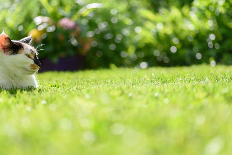 De mening van het wormenoog van calicokat die in gras leggen stock fotografie