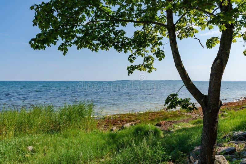 De mening van mooi ziet landschap in Saaremaa, Estland royalty-vrije stock foto's