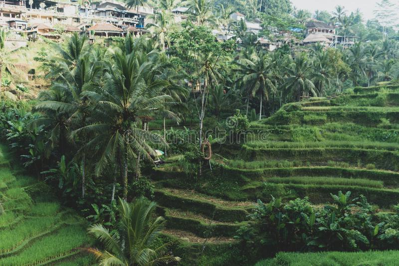 De mening van de ochtendmist van Tegallalang-Rijstterras in Bali, Indonesië stock foto's