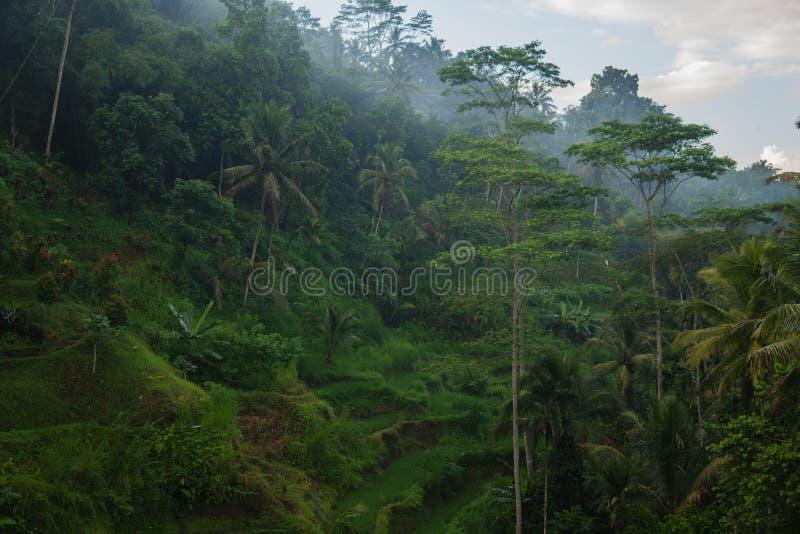De mening van de ochtendmist van Tegallalang-Rijstterras in Bali, Indonesi? royalty-vrije stock foto's
