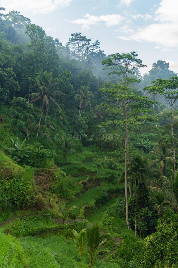 De mening van de ochtendmist van Tegallalang-Rijstterras in Bali, Indonesi? royalty-vrije stock foto