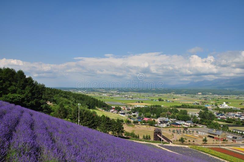 De mening van stad en lavendelgebied op de heuvel stock afbeelding