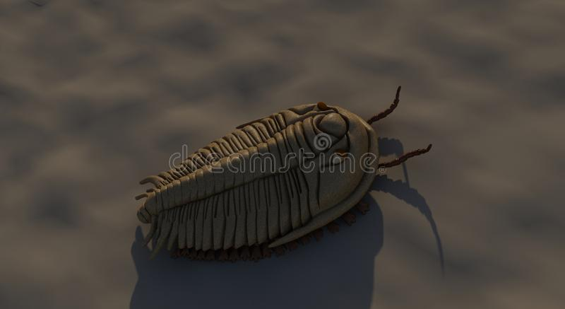 De mening van de Trilobitebovenkant royalty-vrije stock afbeeldingen
