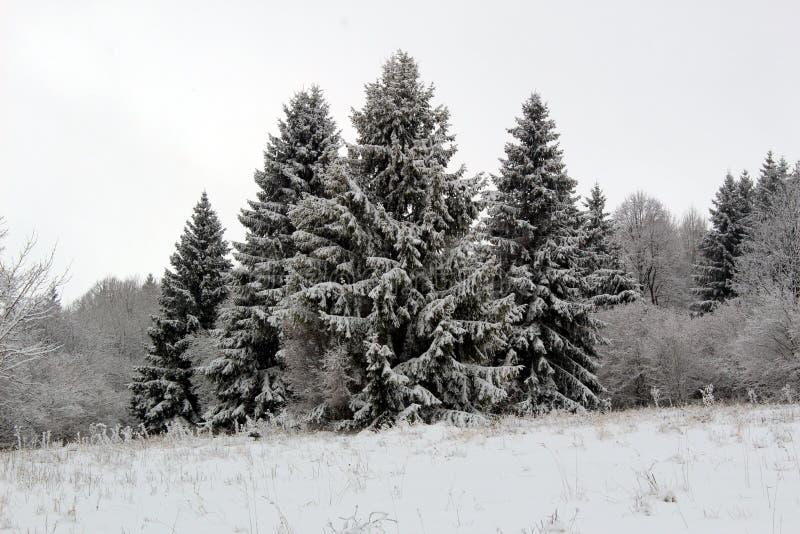 De mening van de de winteraard ergens in Slowakije, stock afbeelding