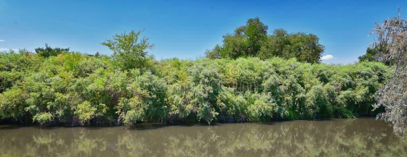 De meningen van Jordan River Trail met het omringen van bomen, Russische Olijf, cottonwood en slib vulden modderig water langs de stock foto's