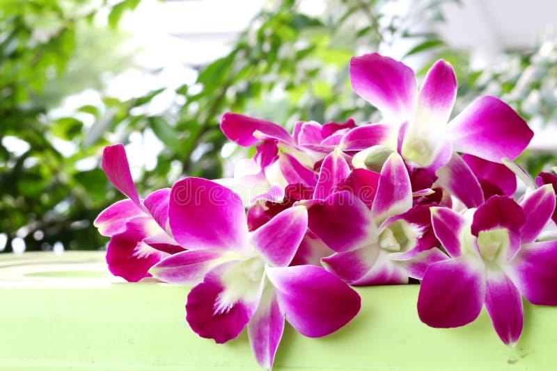 De meningsachtergrond van de orchideebloem stock afbeeldingen