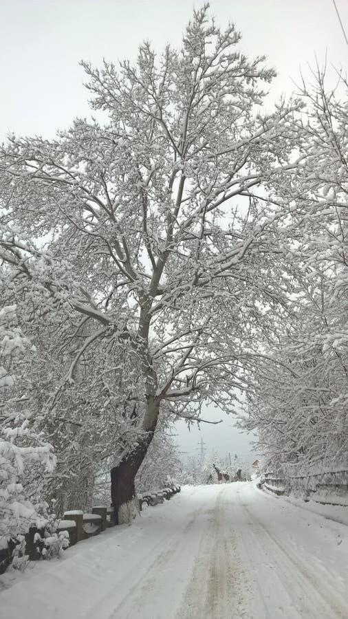 De meningsbomen van Nice stock foto