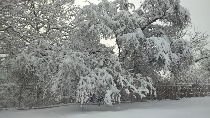 De meningsperspectief van Nice de sneeuw op bomen stock fotografie