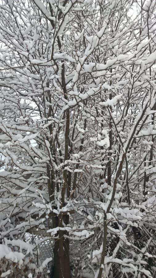 De meningsperspectief van Nice de sneeuw op bomen royalty-vrije stock afbeeldingen