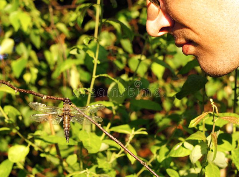 De mens bekijkt libelzitting bij dranch bij de groene achtergrond van de bladerenzomer stock afbeelding