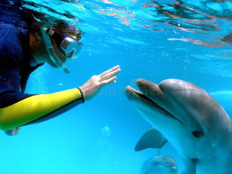 De mens communiceert met een dolfijn stock fotografie