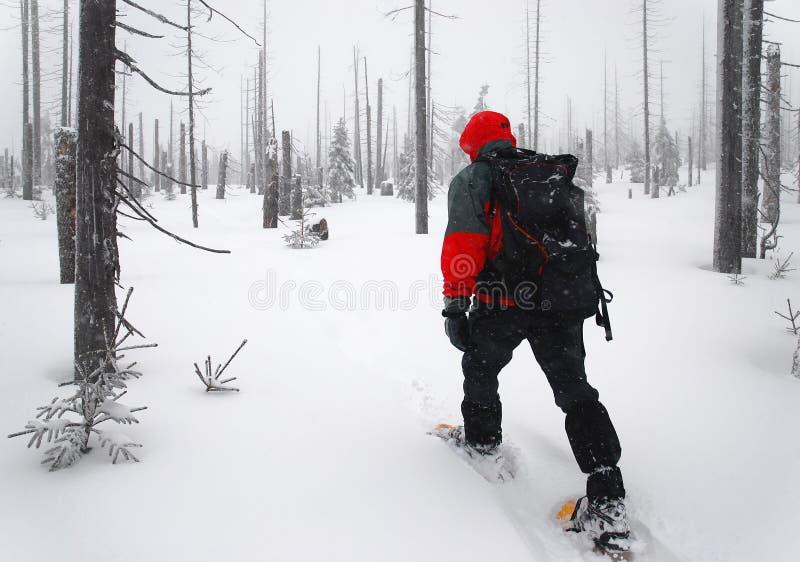 De mens gaat door het hout op sneeuwschoenen stock afbeeldingen